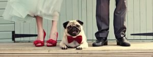 sposi con il cane