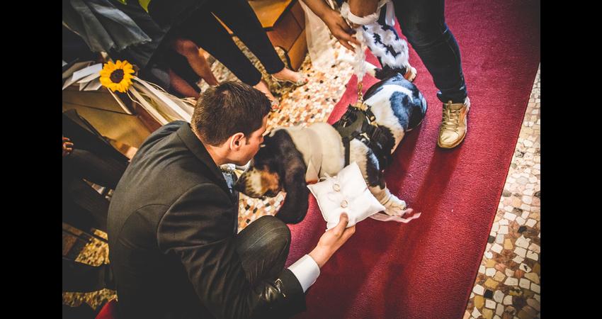 cane con lo sposo e il dog sitter